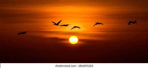 Pelicans flying in sunset sky. Flying pelican in sunset sky. Sunset sky pelicans fly. Sunset pelican fly