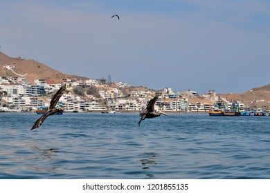 Pelicans flying and view on Pucu sana from the sea.