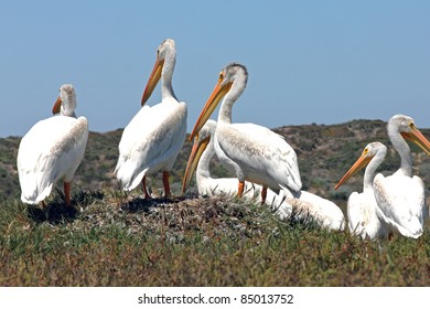 Pelicans and Other Birds at Morro Bay, California