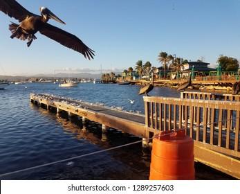 pelicans and pier in La Guancha in Ponce, Puerto Rico