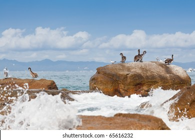 Pelicans resting on the rocks of Banderas Bay, Puerto Vallarta, Mexico