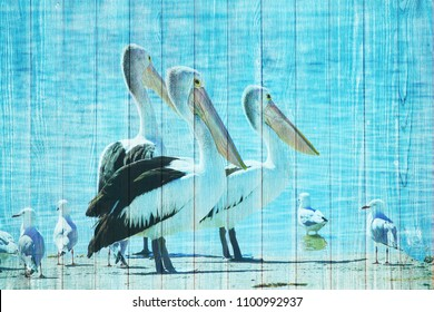 Pelicans and seagull ocean beach mural on turquoise wooden wall