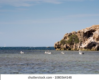 Pelicans swimming in the ocean, Penguin Island, Western Australia