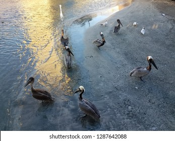 pelicans and water and sand in La Guancha in Ponce, Puerto Rico