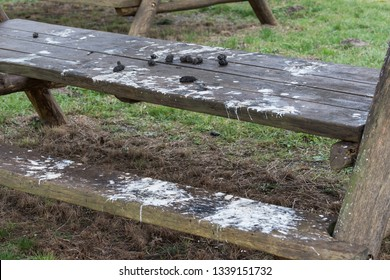pellet and droppings of a barn owl, Tyto alba, with bones of prey on a picnic table, nature park Droemling, Saxony-Anhalt, Germany