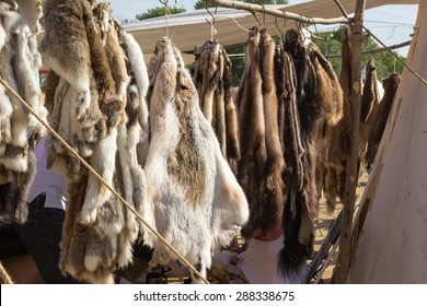 pelts of fur animals hang on a rope