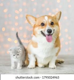 Pembroke welsh corgi dog and baby kitten sit together on festive background