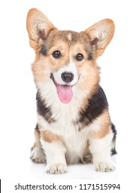 Pembroke Welsh Corgi dog with open mouth looking at camera. isolated on white background