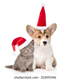 Pembroke Welsh Corgi puppy and kitten with red christmas hats sitting in front view together. isolated on white background