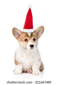 Pembroke Welsh Corgi puppy with red christmas hat sitting in front. isolated on white background