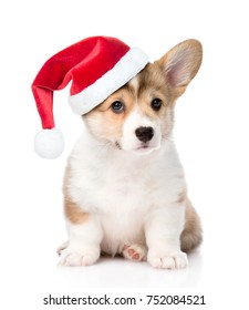Pembroke Welsh Corgi puppy with red christmas hat sitting in front view. isolated on white background