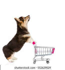 Pembroke Welsh Corgi Puppy with shopping trolley looking up. isolated on white background