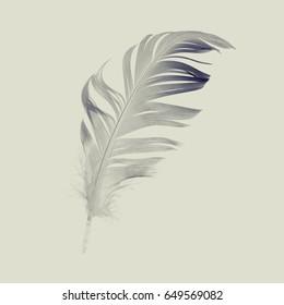 pen feather closeup, vintage style photography
