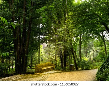The Pena Park is a vast forested area completely surrounding the Pena Palace, in Sintra, Portugal