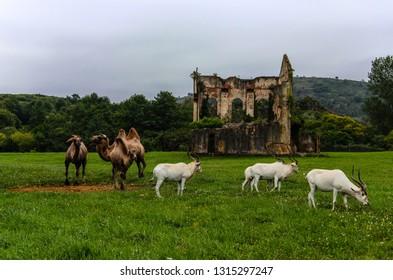 Penagos, Cantabria, Spain, July 16, 2014: National Park of Cabárceno