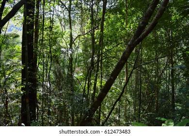 Penang National Park (Taman Negara Pulau Pinang). Flora and fauna. Wild nature of Malaysia