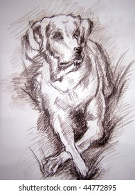 pencil drawing of the dog