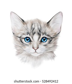 Pencil drawing of a grey kitten