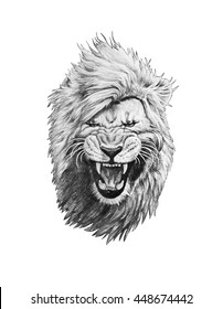 Pencil drawing of a lion head isolated on white background