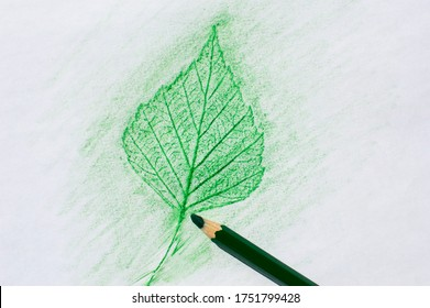 Pencil rubbing a leaf of birch on a white background.
