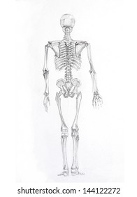 Pencil sketch a skeleton