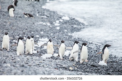penguin in antarctica islands