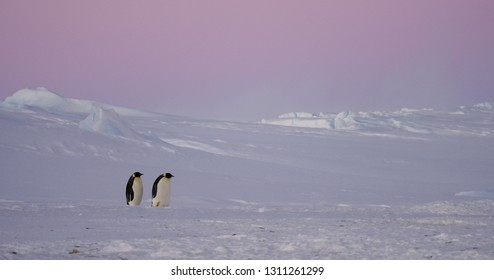 penguin in antartica, south.