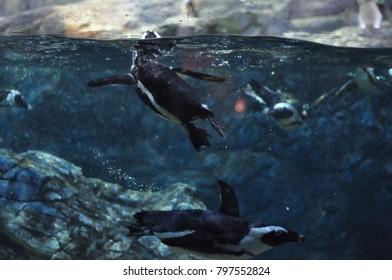penguin in aquarium