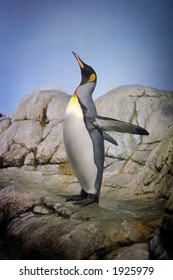 Penguin with beak towards the sky and flapping wings on rocks.