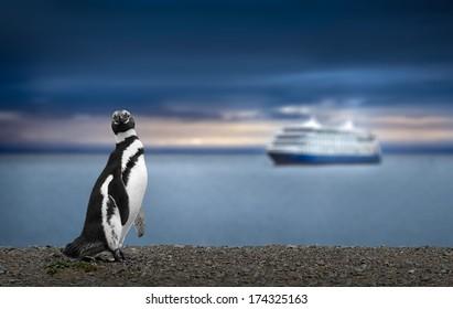 Penguin and Cruise Ship in Patagonia. Awe inspiring travel image.