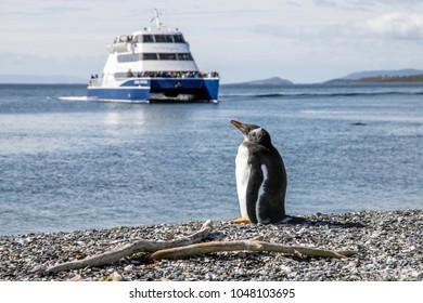 Penguin enjoying last moments of rest
