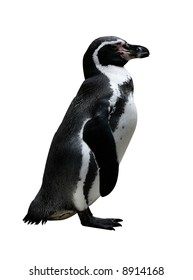 a penguin isolated on a white background