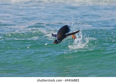 Penguin jumps out of the water while swimming through the ocean.