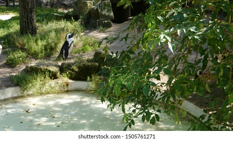 A penguin at a local zoo,