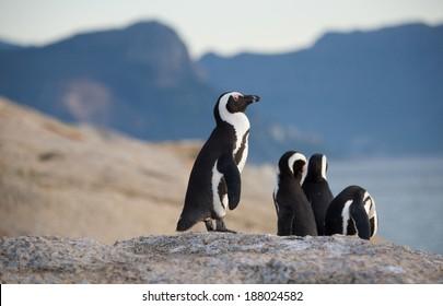 Penguin Lookout Cape Town