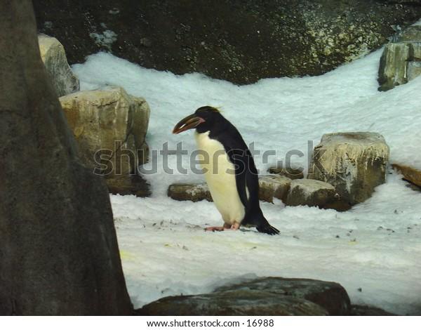 Penguin on Ice