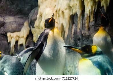 Penguin portrait.