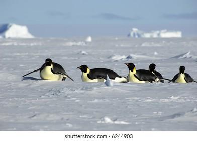 Penguin procession in Antarctica