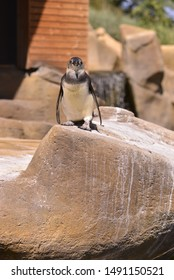 A penguin standiung on a stone.
