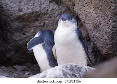 Penguin St.Kilda, Melbourne, Australia.