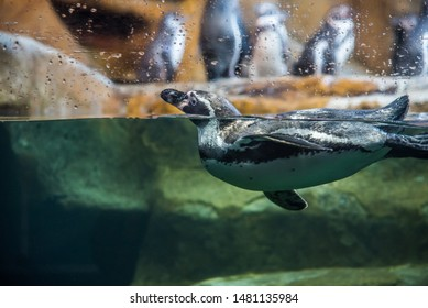 penguin swimming in tub in front of glass with drops of water, transparent background
