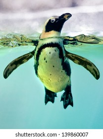 A penguin swimming in an zoo.
