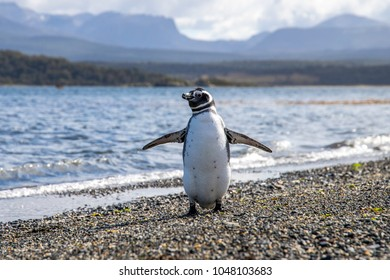 Penguin welcoming with open arms