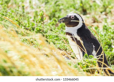 Penguin in the wild green and yellow colored grass