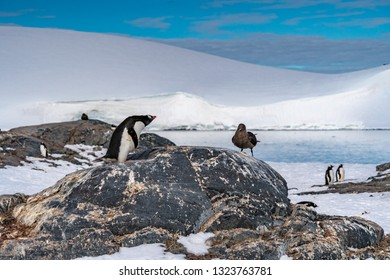 Penguins against seagull in Antarctica
