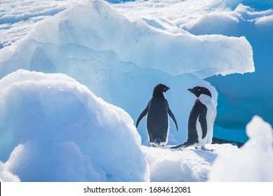 Penguins in Antarctica (chinstrap, adelie, gentoo) in snow, mountains, rocks, icebergs