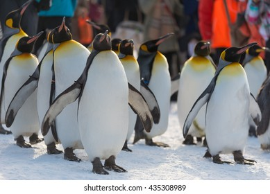 penguins in asahikawa zoo