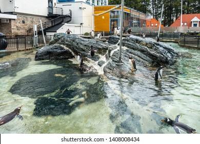 Penguins at Bergen Aquarium, the largest aquarium in Norway and one of Bergen's biggest tourist attractions. Bergen, Norway, August 2018