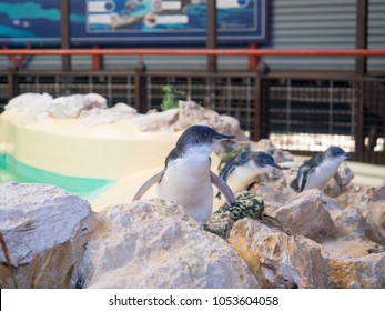 Penguins in the Discovery Centre, Penguin Island Conservation Park, Western Australia