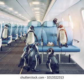 penguins   fly in the airplane cabin. Creative media mixed concept
